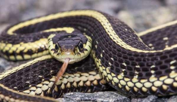 Что значит когда снится змея которая кусает