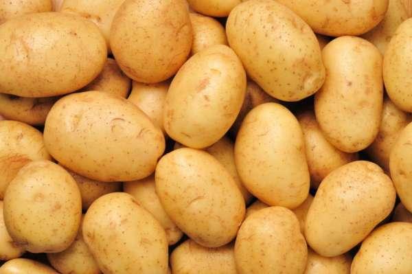 SlavicNews.ru - Может ли сниться сырая картошка? К чему это? Значение. Толкование - все секреты снов на нашем сайте